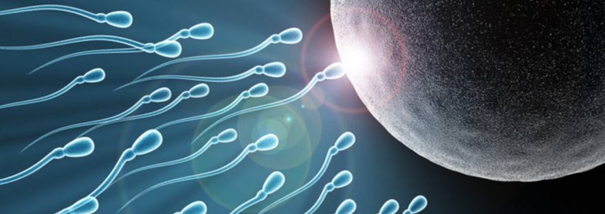 que-es-la-reproduccion-humana