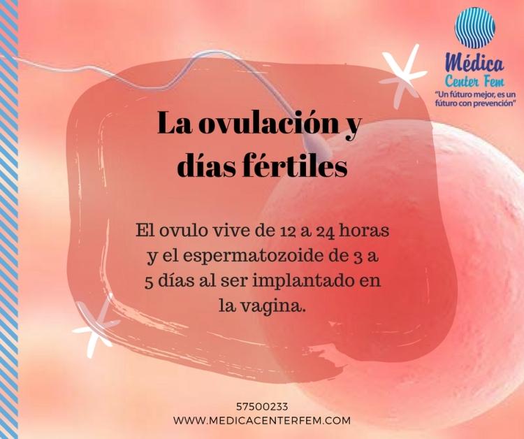 La ovulación y días fértiles