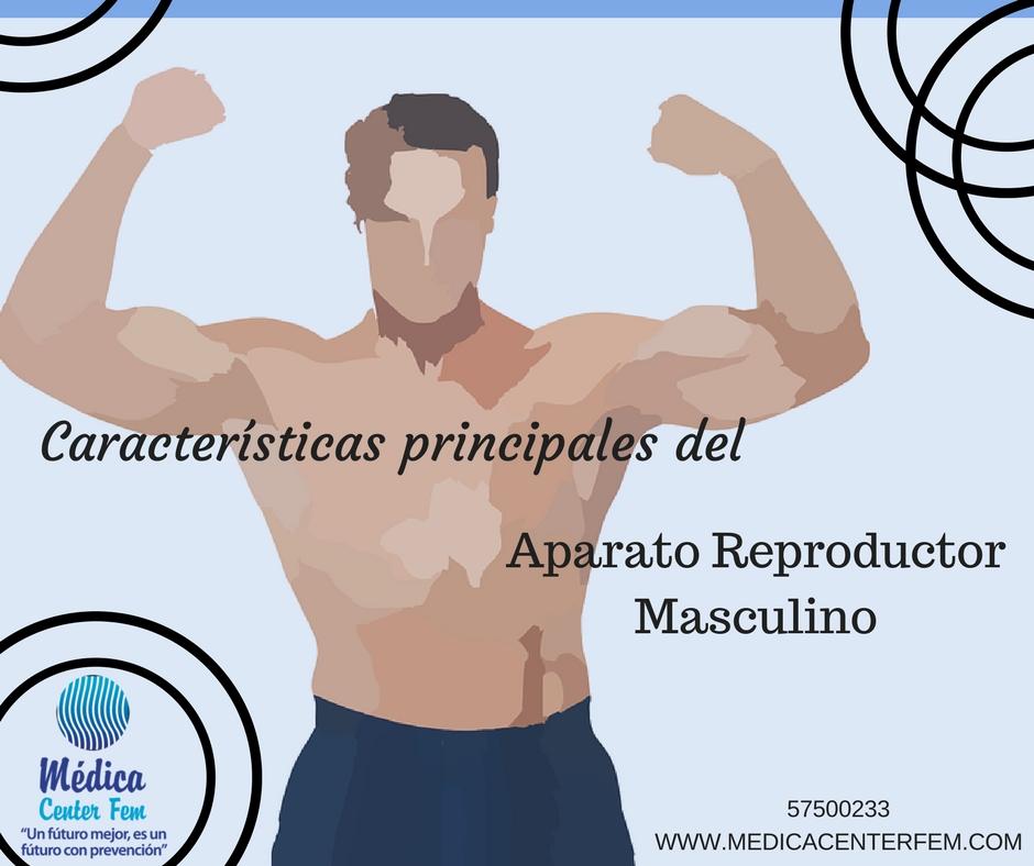características principales del aparato reproductor masculino