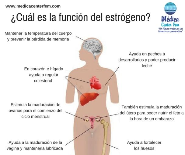 ¿Cuál es la función del estrógeno?